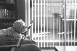 avocat animal